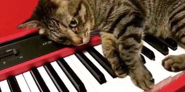 고양이 두 마리가 그들만의 음악 세계를