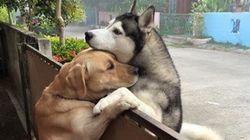 외로운 개가 집을 탈출해 친구를