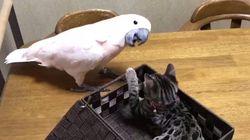 도구를 사용하는 앵무새와 그냥 고양이가 만났더니