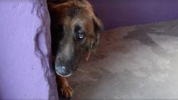 8년간 묶여살던 개가 처음 '쓰담'을 받는