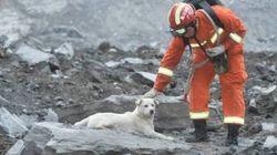 쓰촨성 산사태 현장에서 발견된 개가 구조를 거부하는