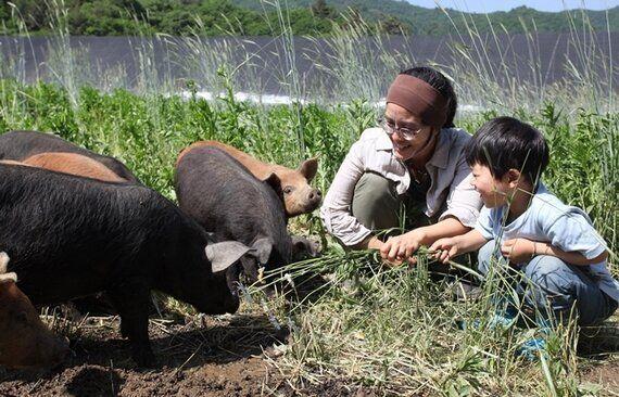돼지발정제와 '여성