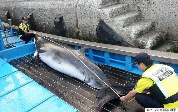 그물에 걸린 밍크고래를 '바다의 로또'라고 해서는 안 되는
