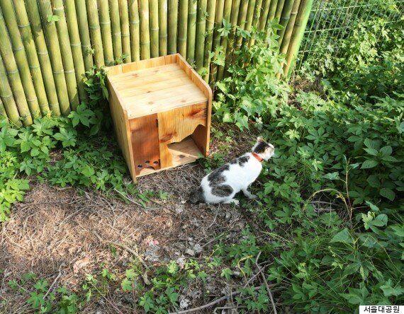 서울대공원에 살던 길고양이들은 이제 길고양이가