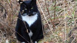 아파트 주민들이 고양이들을 죽인 혐의로 관리사무소를