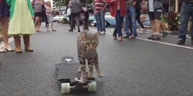이 고양이는 끝내주는