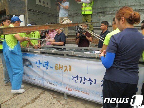 서울대공원에 '태지를 돌고래 불법포획 업체에 보내지 말라'는 비판이 이어지고