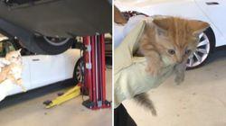 테슬라 범퍼에 낀 고양이가 구조된