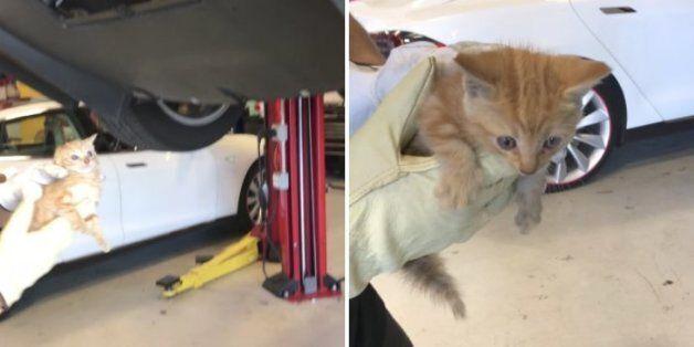 테슬라 범퍼에 낀 새끼 고양이가 구조된