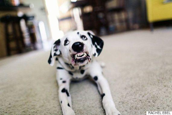 3년 6개월에 걸쳐 개에게 '웃어'라는 명령을