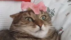 고양이의 멍청한 모습만 모아 놓은 영상을 보니 정말