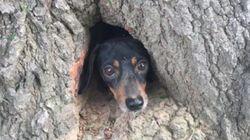 나무에 낀 강아지를
