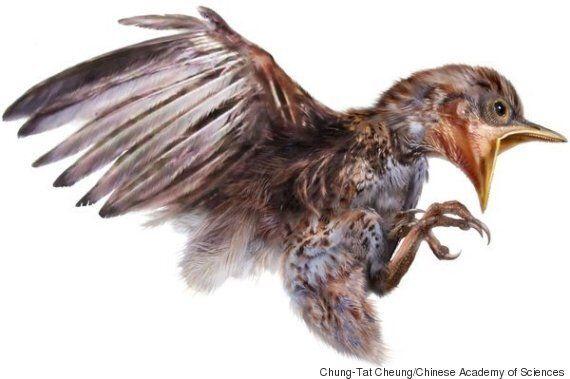 9900만년 전에 살았던 새의 화석이