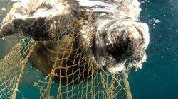 트럼프가 기후협약 탈퇴에 이어 고래·거북이 혼획을