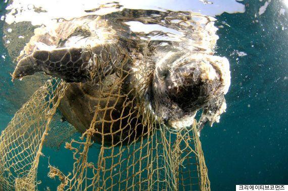 트럼프, 오바마정부의 해양동물 혼획 방지 조처