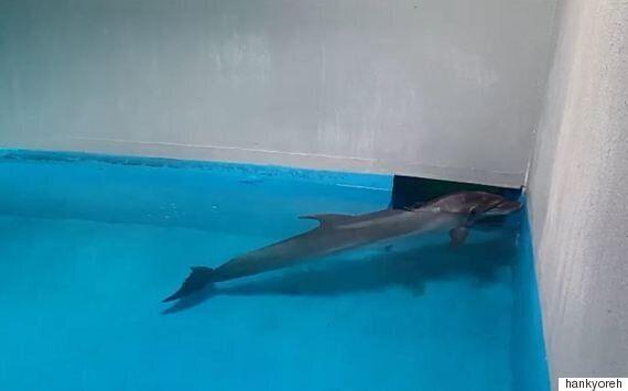 고향에 돌아갈 수 없는 큰돌고래 '태지'의