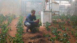 중국은 달에서 '감자'를 키울