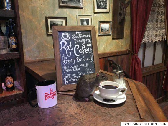 이 카페에서는 고양이 대신 '쥐'와 어울리며 커피를 즐길 수