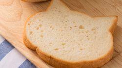 먹기에 너무 아까운 '고양이 식빵'이