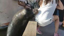바다사자가 어린아이를 물속으로 끌고