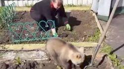 어느 러시아 가정의 반려곰은 밭일도