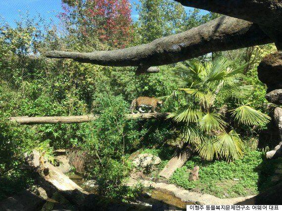 동물을 '구경거리'로 취급하지 않은 동물원을