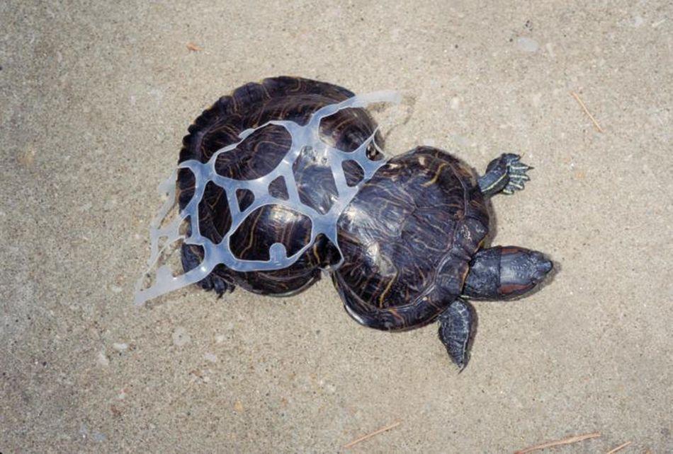 당신이 무심코 버린 쓰레기가 동물들을 이렇게 해친다 (사진)