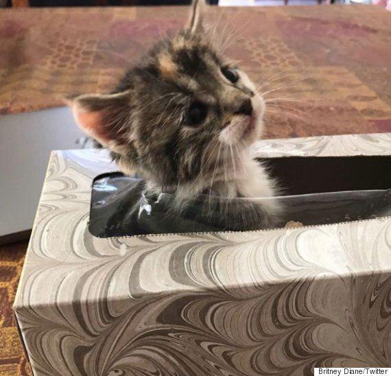 한 시간 동안 집안에서 실종된 고양이가 숨어 있던