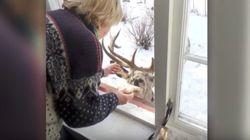 이 사슴은 하루에 2번씩 할머니를