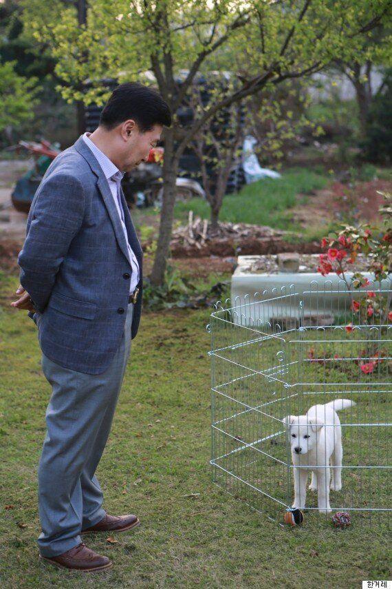 박근혜가 놔두고 간 진돗개 중 3마리의 최신 근황(사진