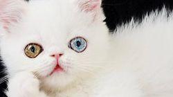 이 몽환적인 고양이는 이미 인스타 스타가