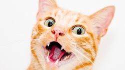 '고양이와의 동거'가 어떤 것인지 말하는 트윗