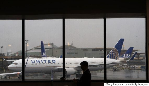 유나이티드 비행기에 탄 동물들이 죽거나 부상당한 비율은 다른 항공사에 비해