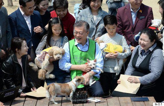 이번 대선은 모든 후보가 '동물복지'를 공약으로 내건 사상 최초의