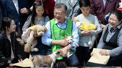 모든 후보가 '동물복지' 공약을 냈다.