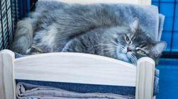 이케아가 고양이 보호소를 위해 인형침대를
