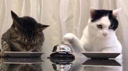두 고양이가 벨을 눌러 음식을 주문하는 모습이 19만 번