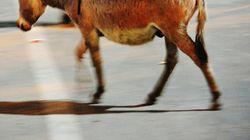 당나귀 3마리가 강남 가로수길 나들이에 나섰다