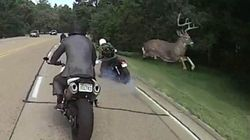 사슴이 달리는 오토바이를 뛰어 넘었다