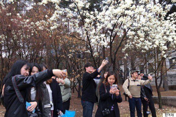 벚꽃 아래, 스마트폰으로도 근사한 사진을 찍게 해 줄
