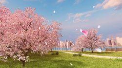내 생애 최고의 벚꽃 피크닉을 즐기는 5가지