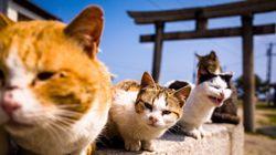 고양이로 점령된 이 일본 섬의 이야기는