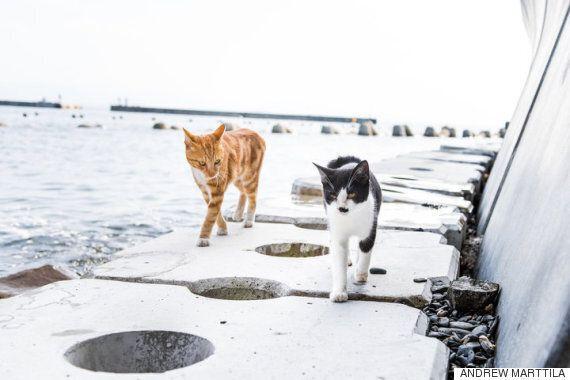 고양이로 점령된 이 일본 섬의 이야기는 복잡하다