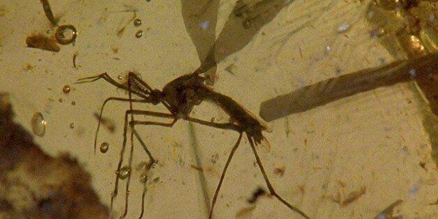 전염병 채집하는 '모기