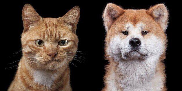 동물들에게도 저마다의 개성과 표정이
