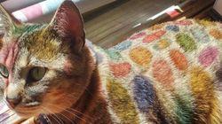 이 고양이의 털이 무지개빛으로 변한 귀여운