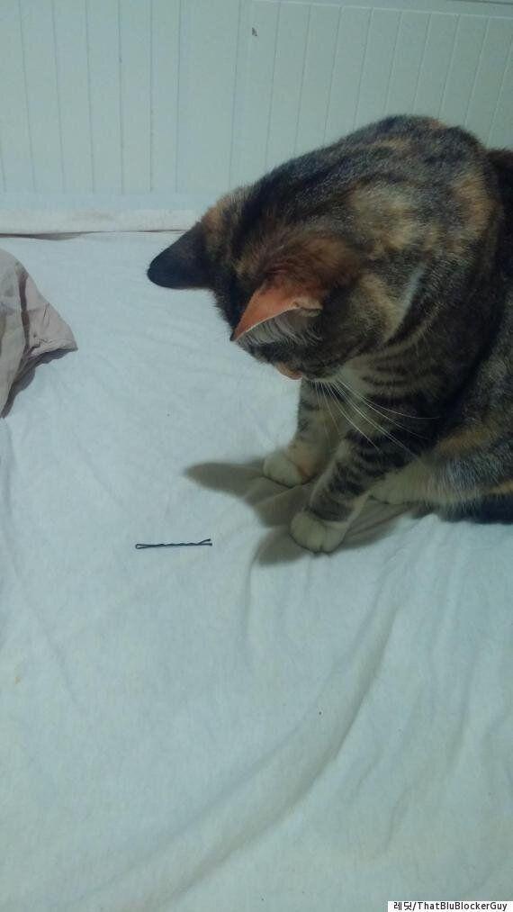 동거인이 몇 년 만에 연애를 시작하자 고양이는 혼란에