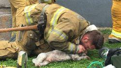 소방대원이 심폐소생술로 숨이 멈춘 개를
