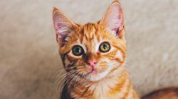 헌법에 '동물보호권'을 넣자는 서명운동이