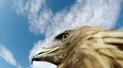 고프로를 단 독수리가 여우를 사냥하는 놀라운